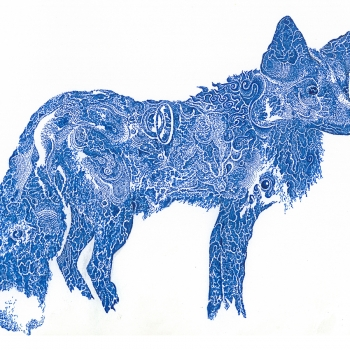 Blue Fox | Archival Ink on Paper | 8 x 10"